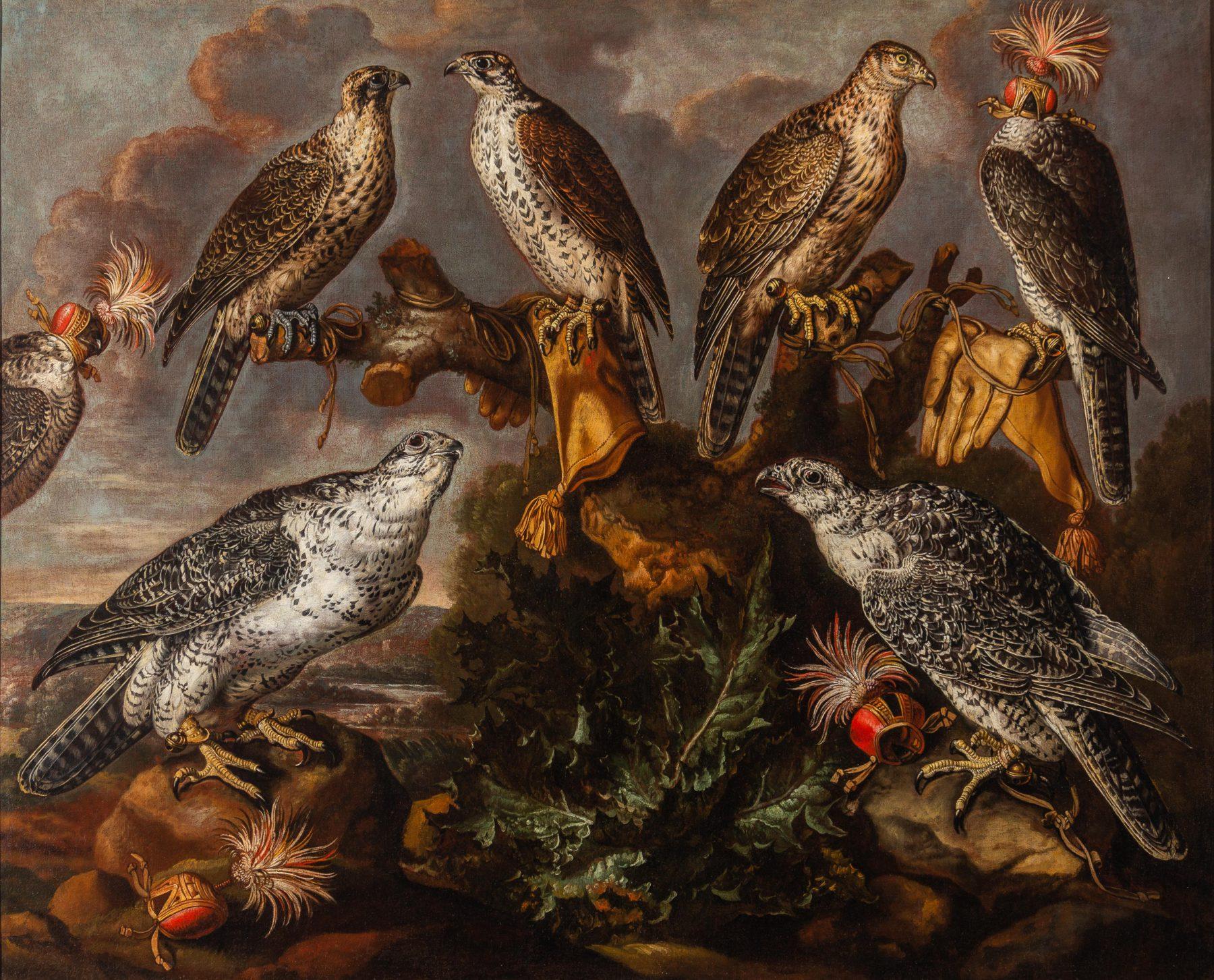 Luyckx falcons