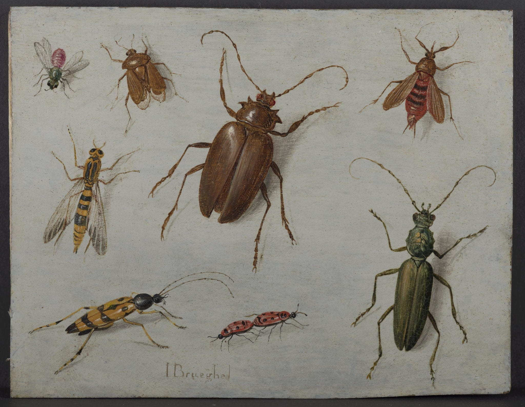 a study of cicada